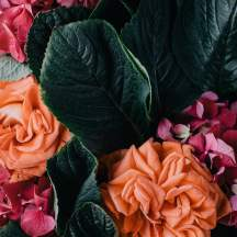 Death_to_stock_photography_bonus_floral_2