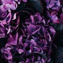 Death_to_stock_photography_bonus_floral_3